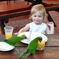 Port Douglas Birds Habitat