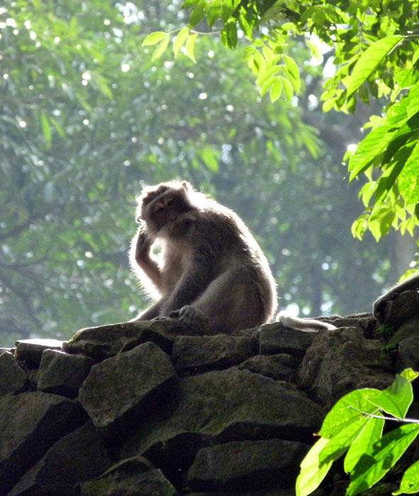 Monkey Forest in Ubud Bali
