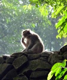 Monkey Forest in Ubud Bali