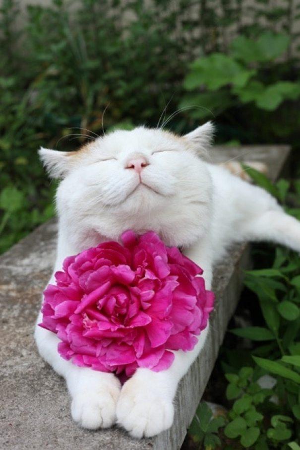 shironeko-happy-cat-7