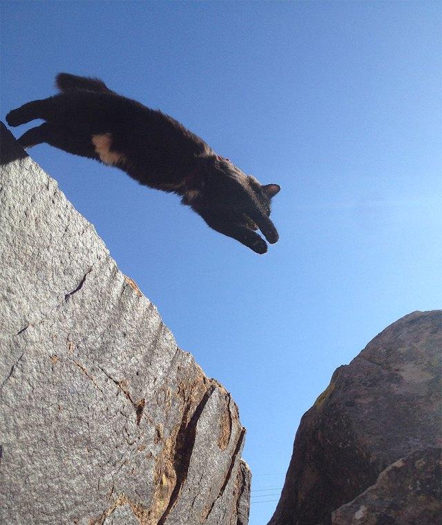 millie-climbing-cat-craig-armstrong-7