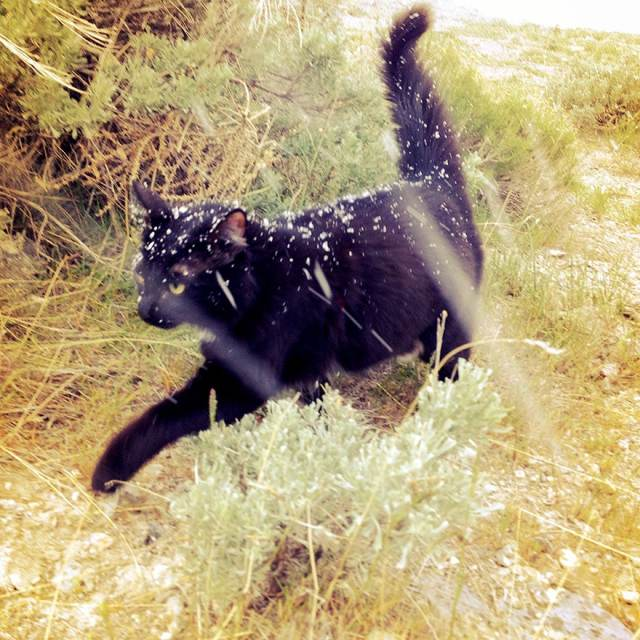 millie-climbing-cat-craig-armstrong-1