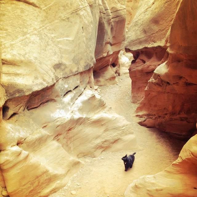 millie-climbing-cat-craig-armstrong-16