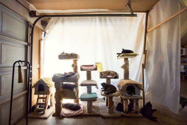 largest-cat-sanctuary-shelter-lynea-lattanzio-1
