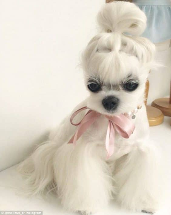 15 Very Interesting And Funny Dog Haircuts This Way Come