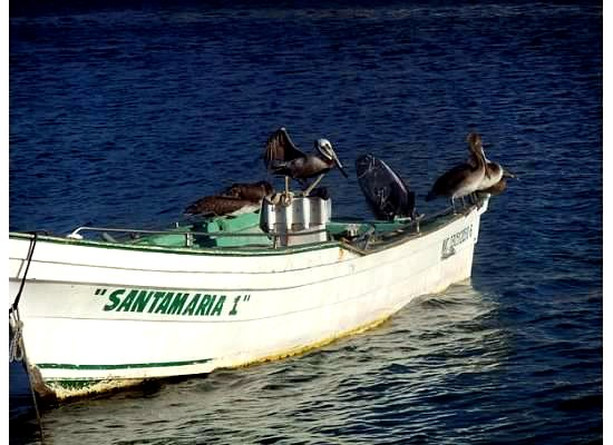 Pelicans on a boat in Cabo San Lucas