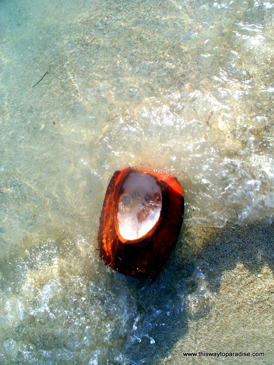 Coconut on the beach in Dominican Republic