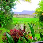 Watching The Rice Grow-What I Learned In Bali
