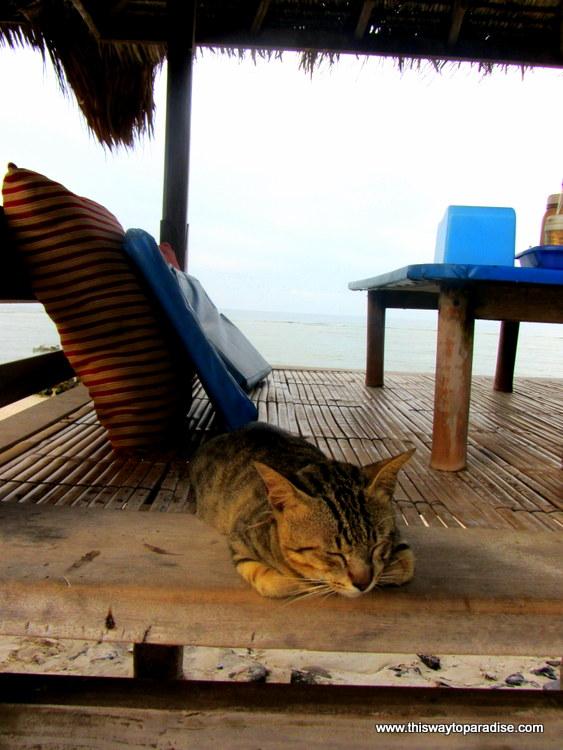 Gili Trawangan Cats