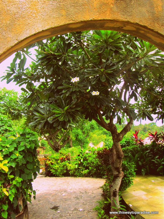 Archway over frangipani tree in Amed, Bali