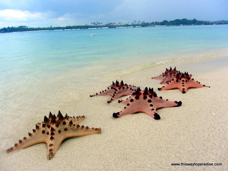 Starfish on Sand Island, Belitung