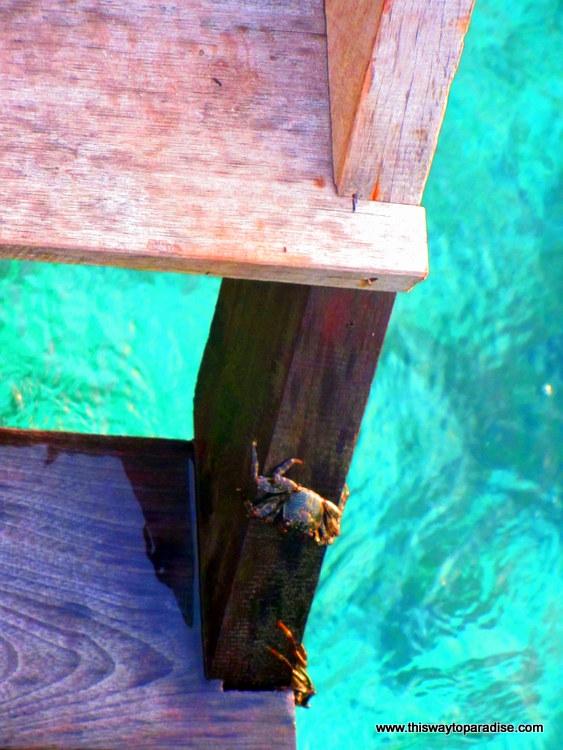 A Crab in Raja Ampat