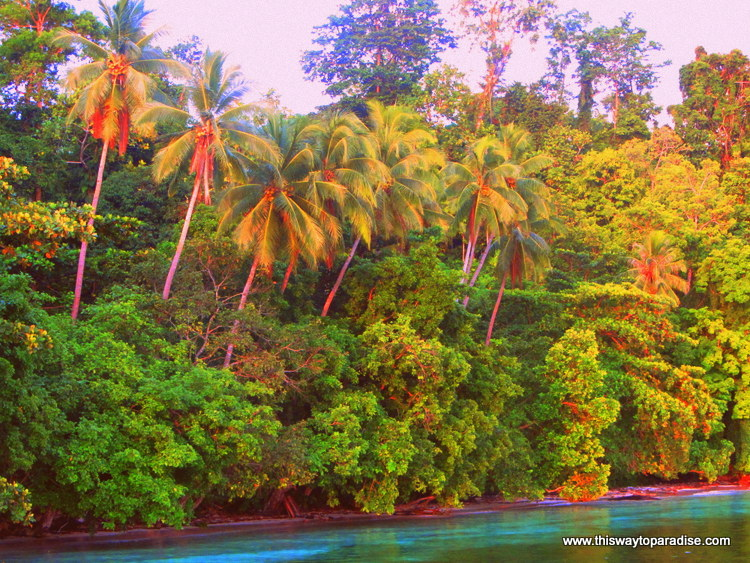Morning light on the palm trees, Raja Ampat