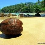 Pictures of Mirissa Beach, Sri Lanka