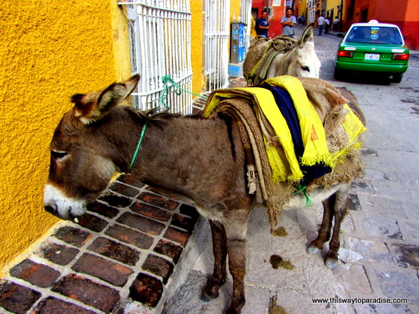Working Burros