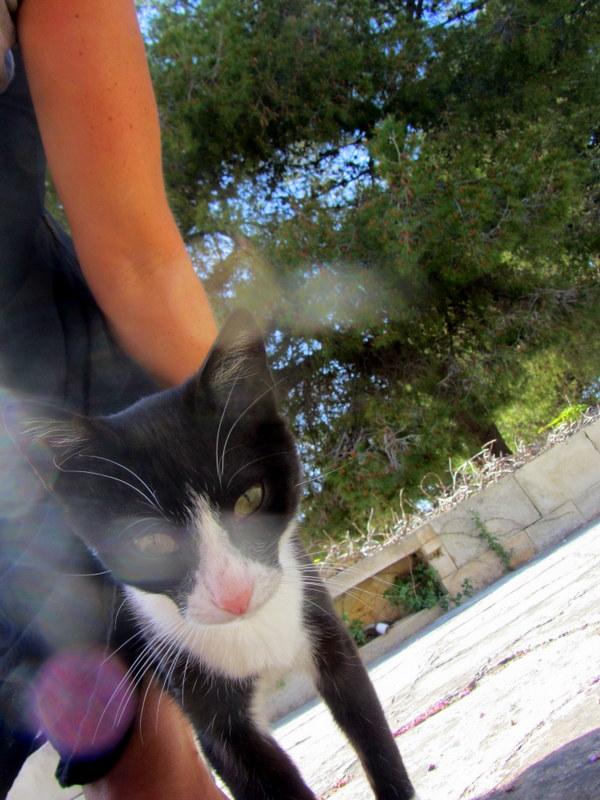 Chania cats
