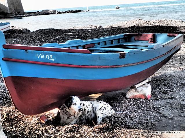 Dog at beach in Trapani