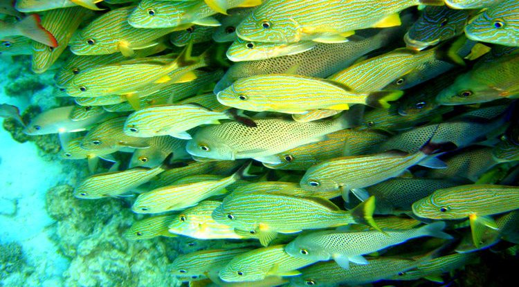 best snorkeling belize barrier reef