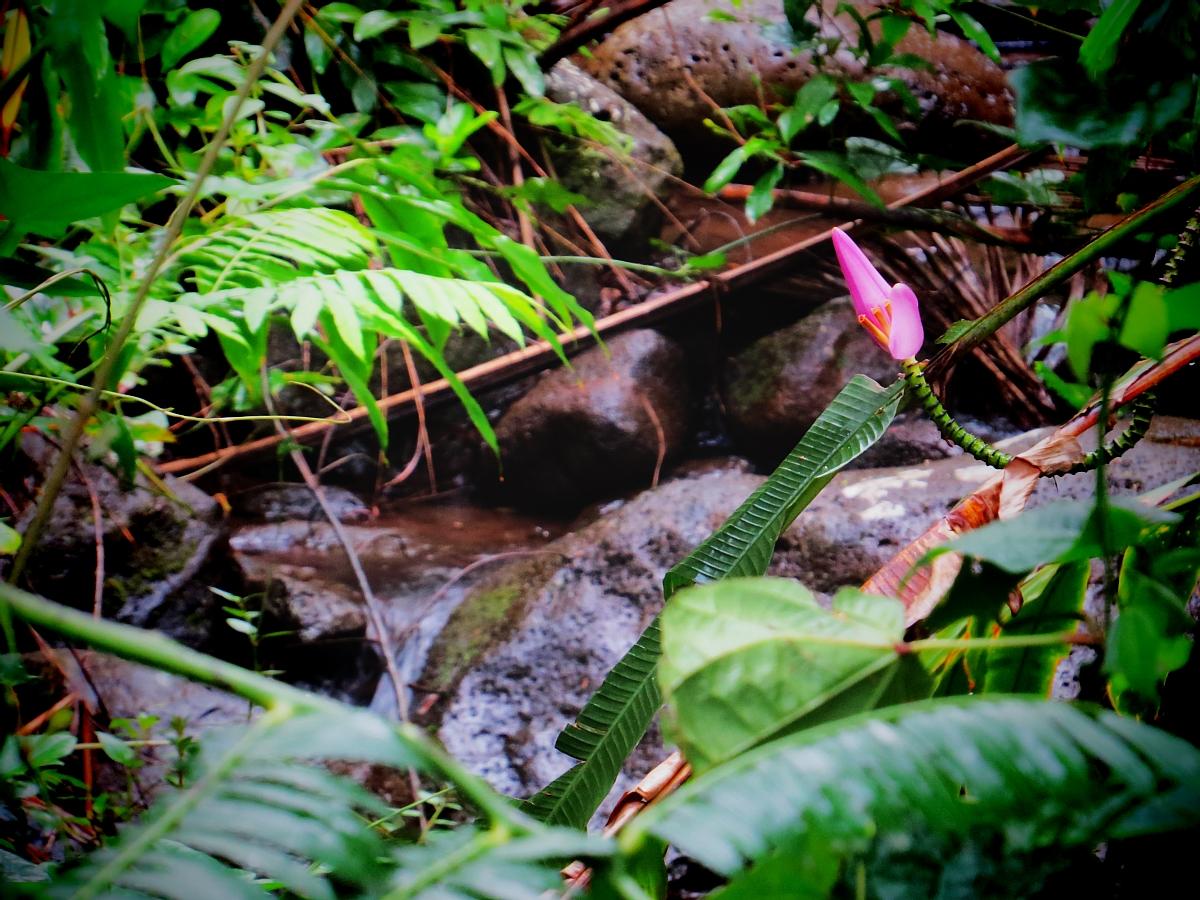 Oahu Hiking: Why You Will Love Manoa Falls