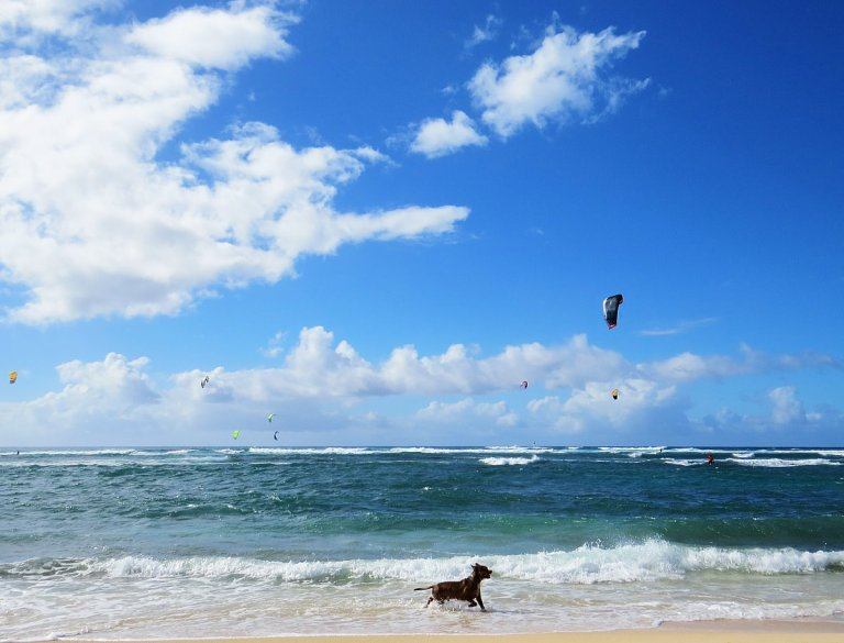 Dream-Worthy Oahu Beaches That Aren't Waikiki