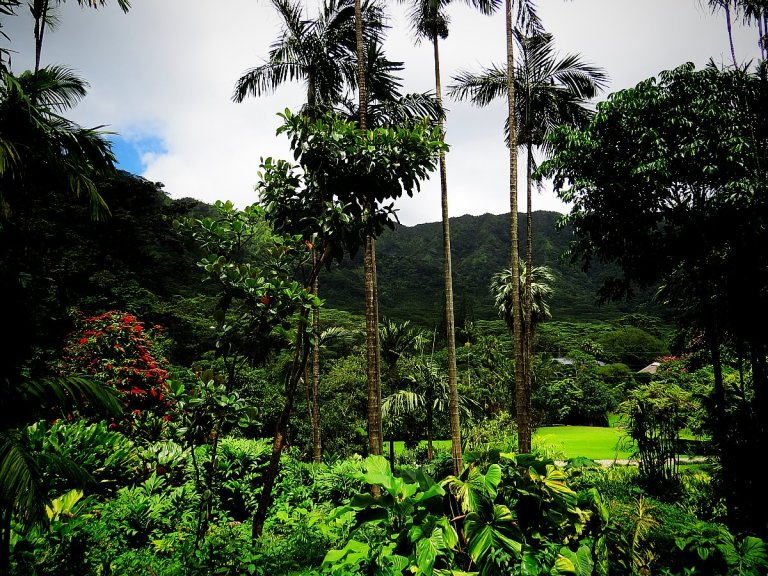 Why You Shouldn't Miss The Lyon Arboretum Botanical Garden On OahuWhy You Shouldn't Miss The Lyon Arboretum Botanical Garden On Oahu