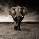 10 Things to Do On A Rwanda Safari Holiday