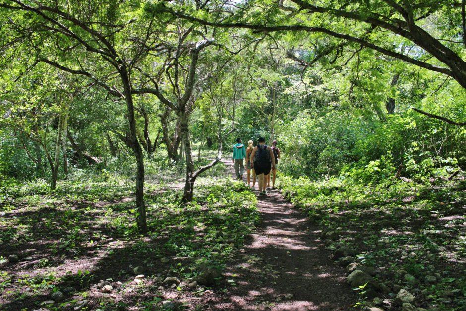 A walk through Komodo National Park, Indonesia