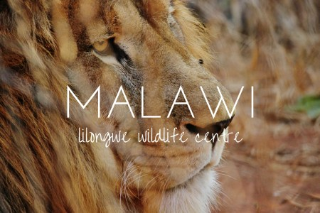 My life as a wildlife rehabilitation assistant in Malawi