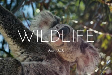 Wild Australia - the unique wildlife you need to see