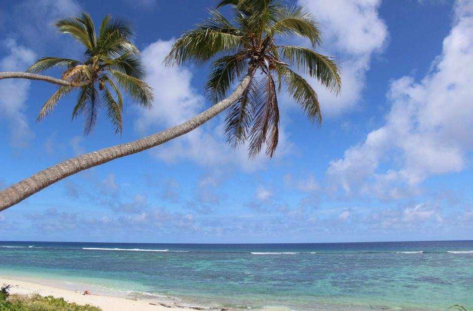 Palm trees over the ocean in Tonga