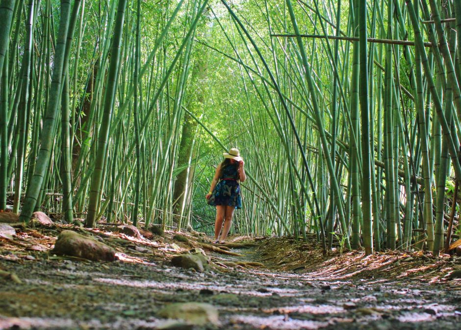 Wandering the bamboo forest at Paronella Park, Australia
