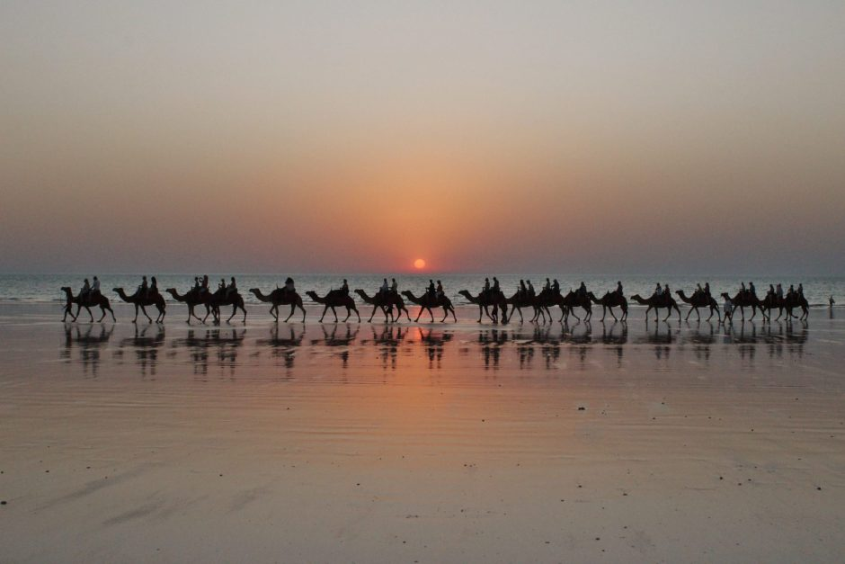 Camels on Cable Beach at sunset, Australia