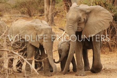 My Top 10 Wildlife Encounters