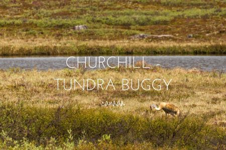 Experiencing the Arctic Summer in Churchill, Manitoba with Frontiers North Tours