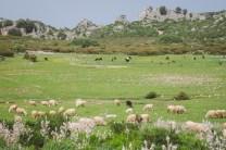 Sardinien-4109