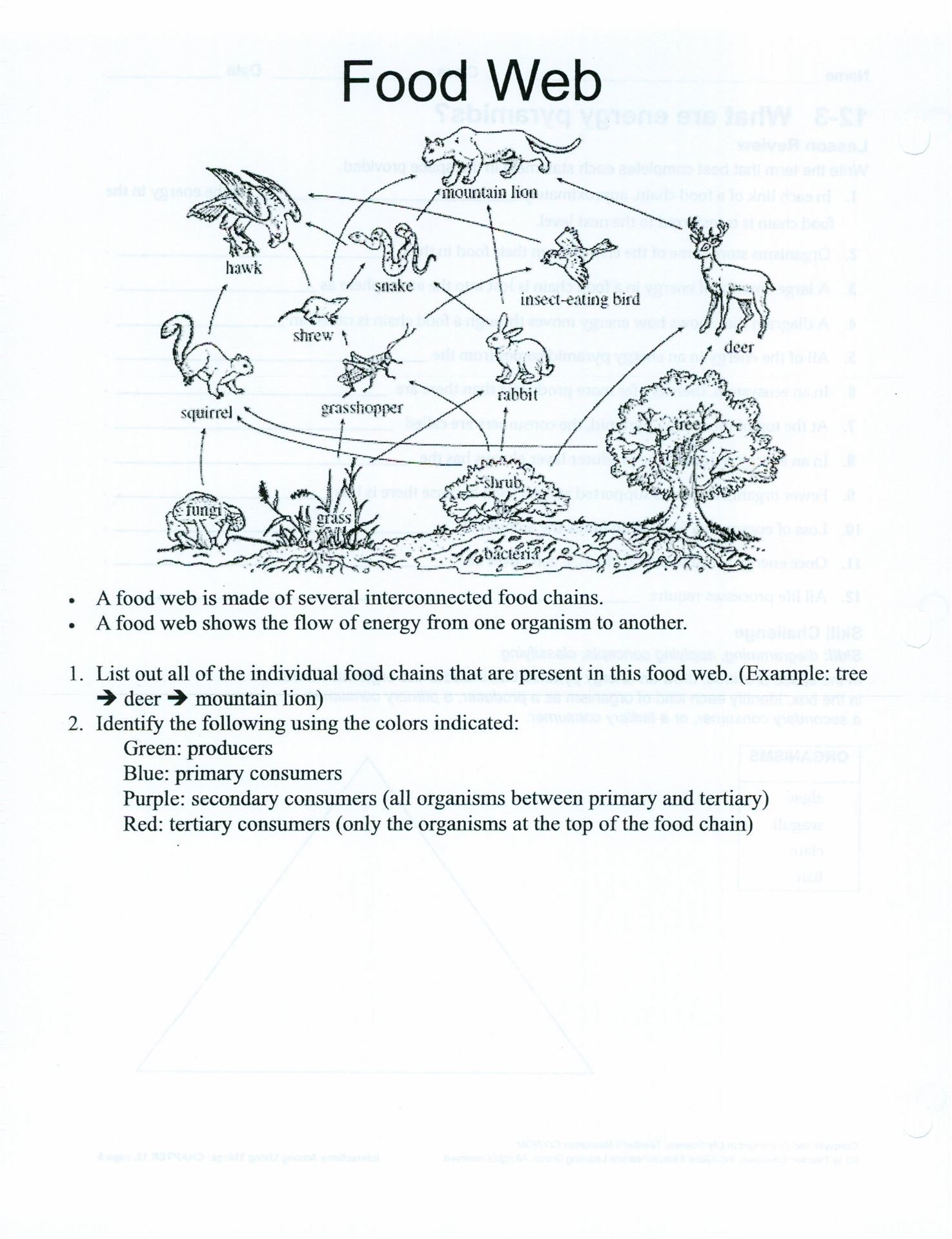 Food Chain Worksheet High School