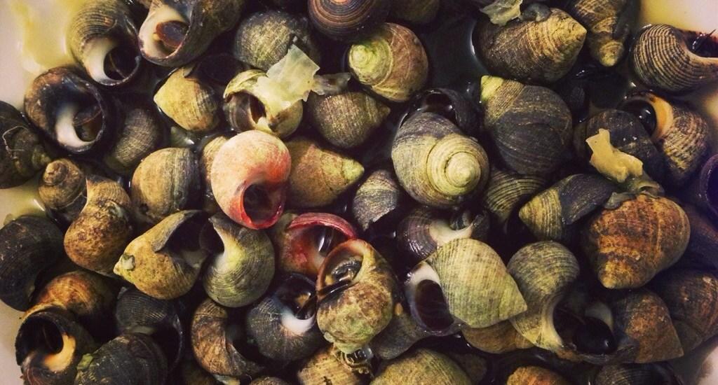 Strandschnecken richtig zubereiten