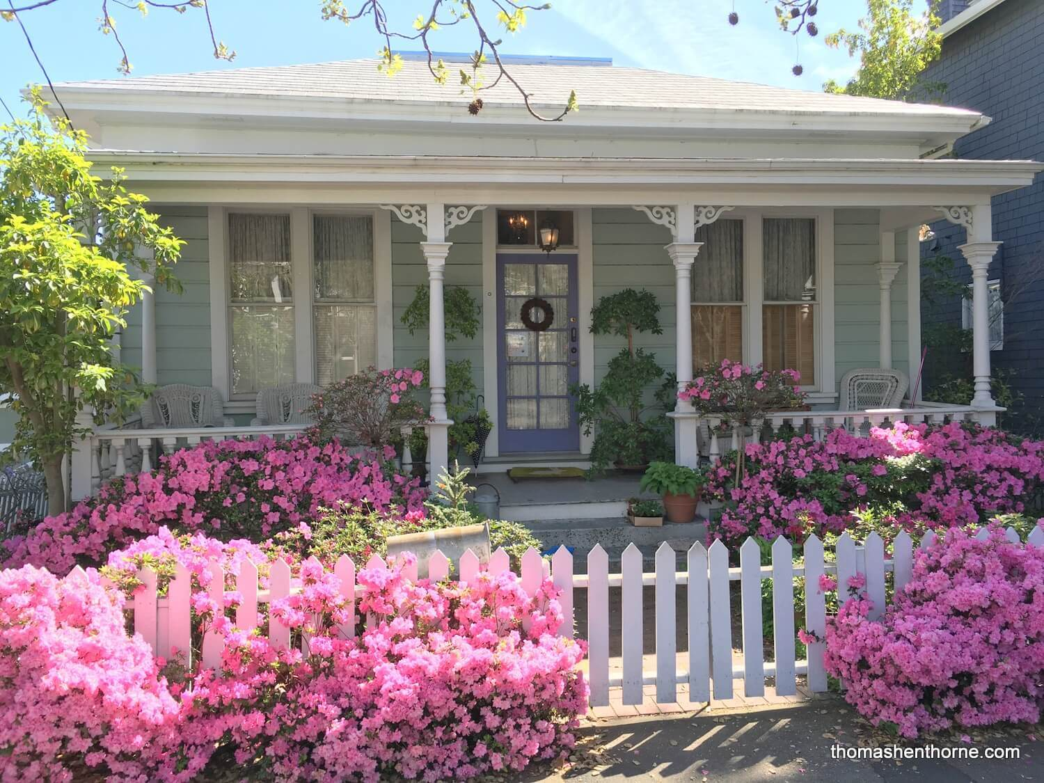 azaleas and white picket fence photo of home