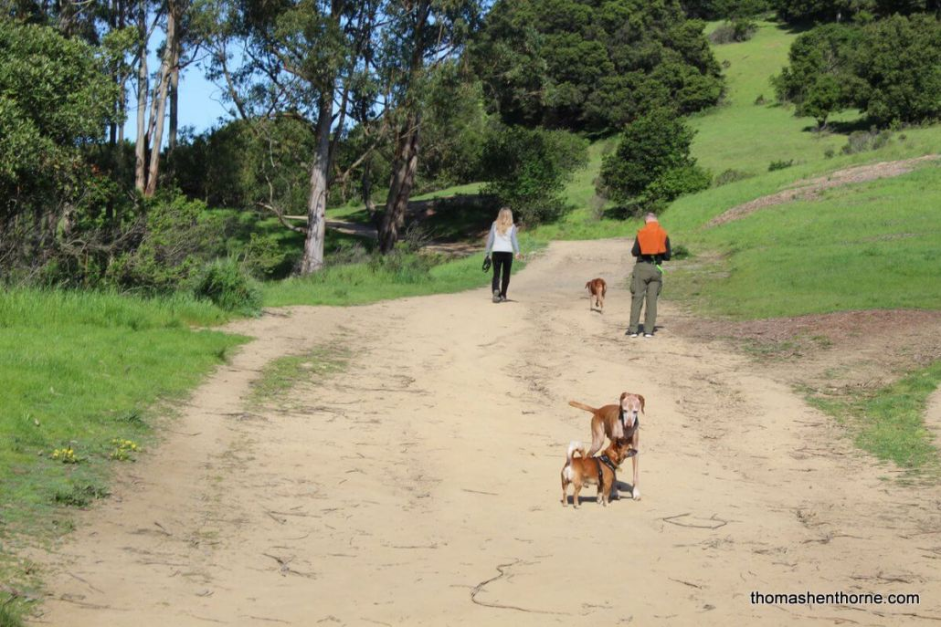 dogs on Ridgewood Trail