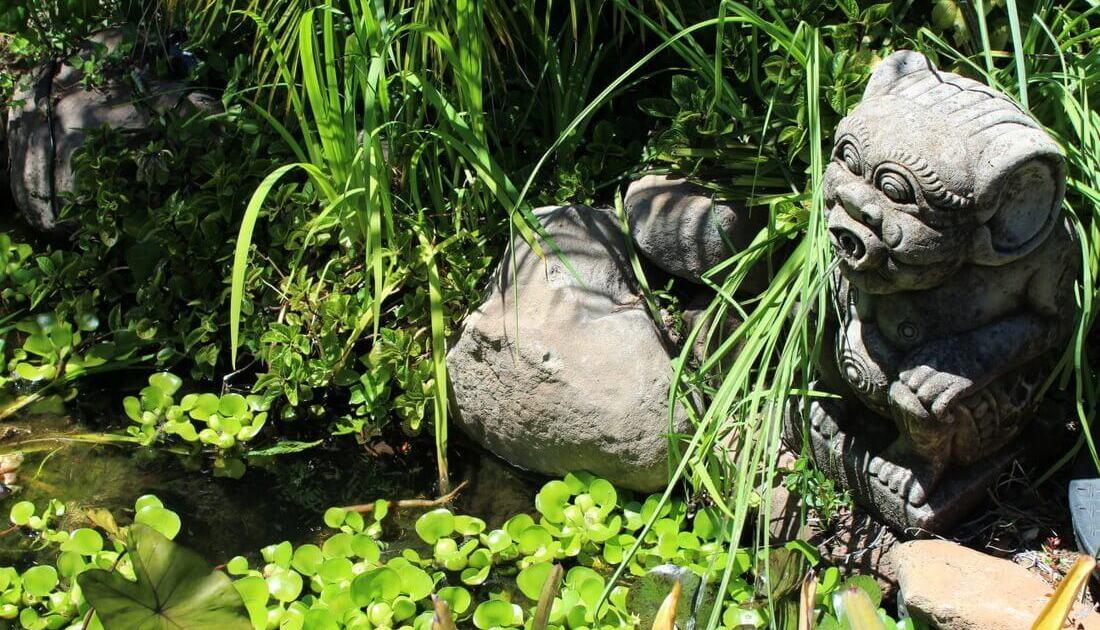 Marin Birds Love Water