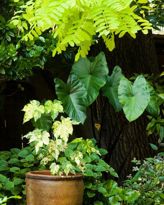 plant vignette