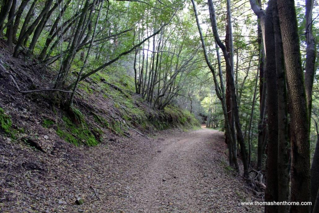 Tree-lined trail in San Rafael California Marin County