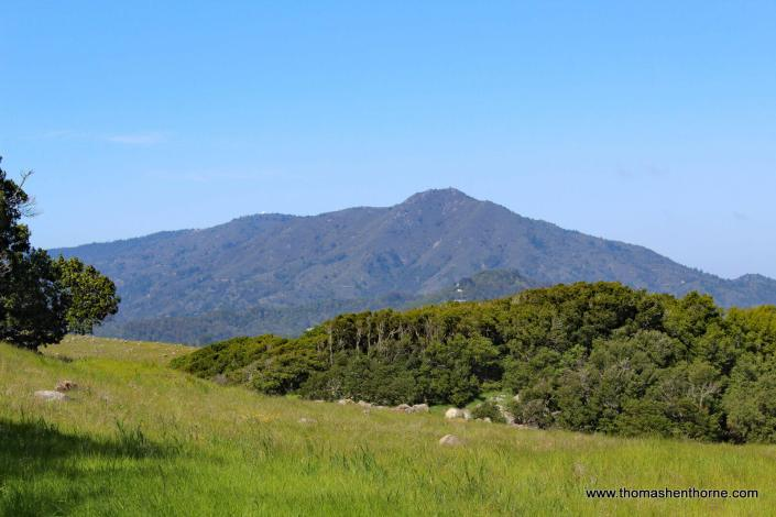 View of Mt. Tamalpais from Ring Mountain Trail