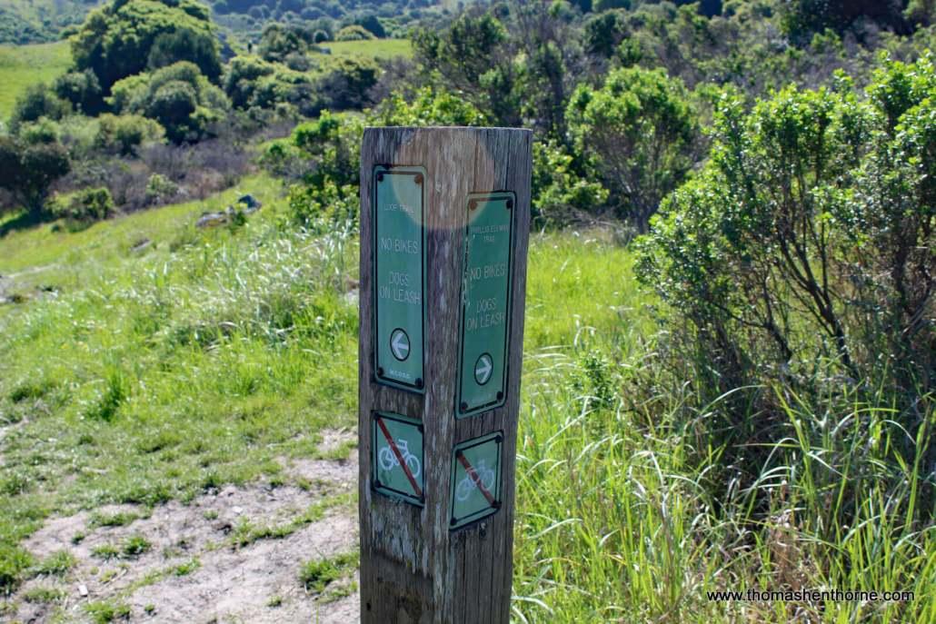 Split between Loop Trail and Phyllis Ellman Trail