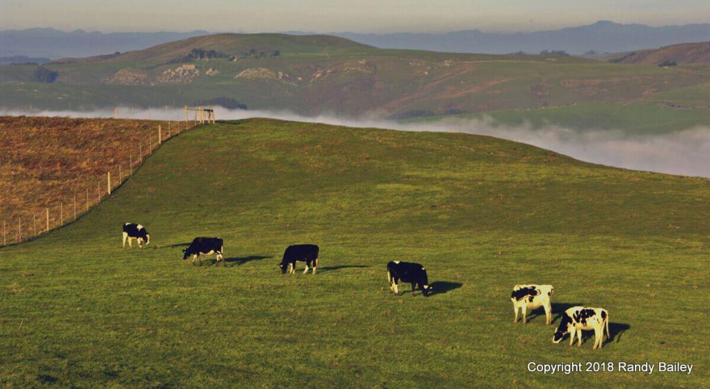 Point Reyes Dairy