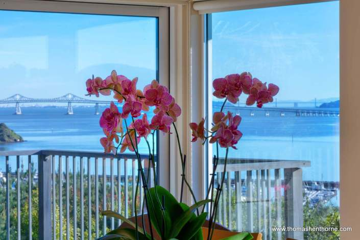 Orchid with Bay View in Background