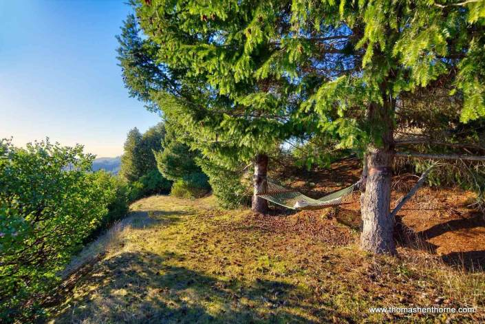 Hammock between two trees