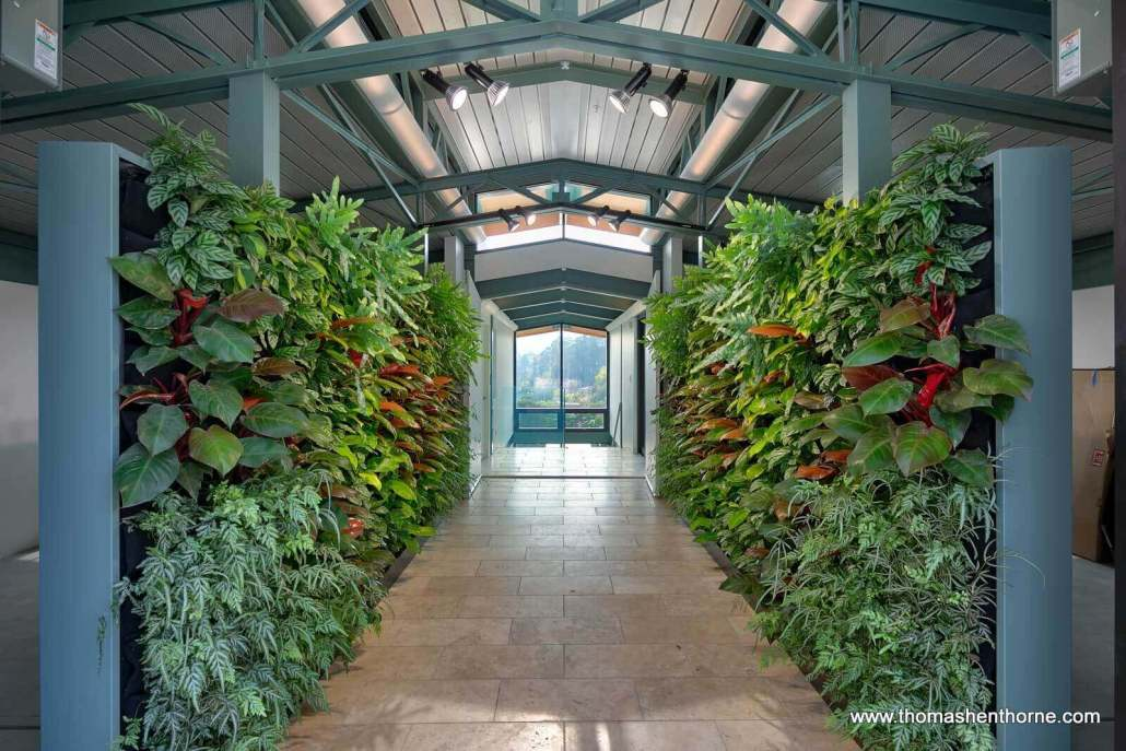 Living wall at home entry