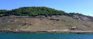 Le Dézaley vu du Léman et du bateau Lavaux.