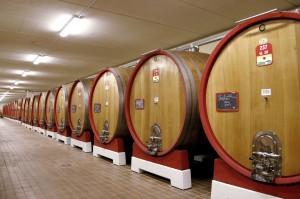 L'Amarone est vieilli dans de grands fûts de chêne de Slavonie, à la Cantine de Negrar.